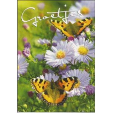 Kaart Groetjes vlinder