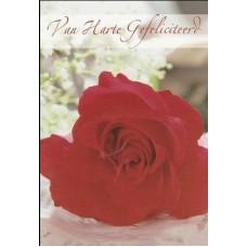 Kaart verjaardag roos